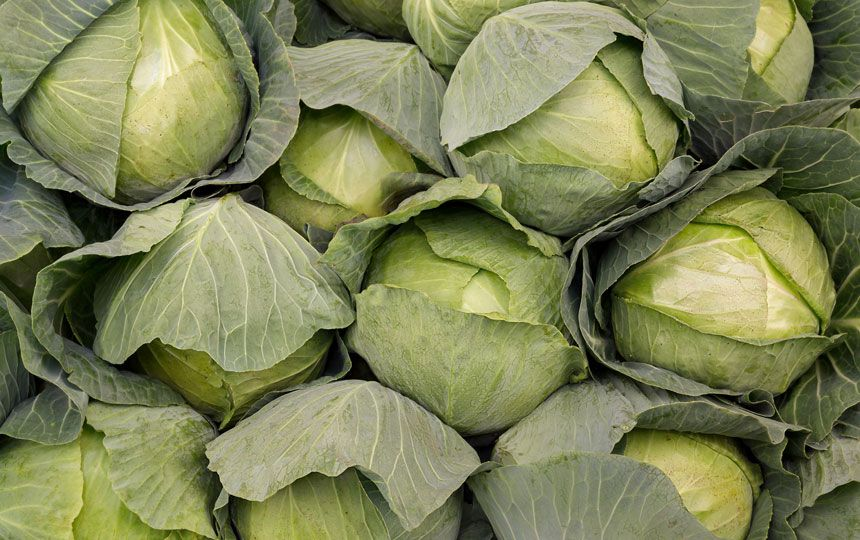 Image for In the news: Cabbage killing cancer, salt not so bad and Google tracking us